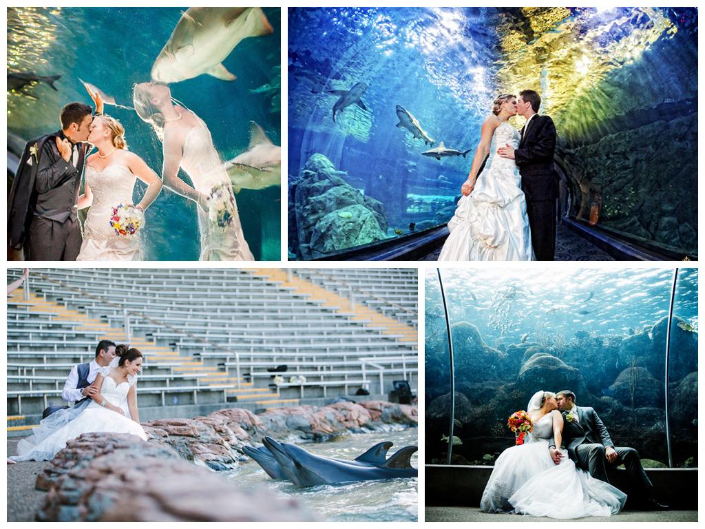 Яркая фотосессия в аквапарке и дельфинарии Москва