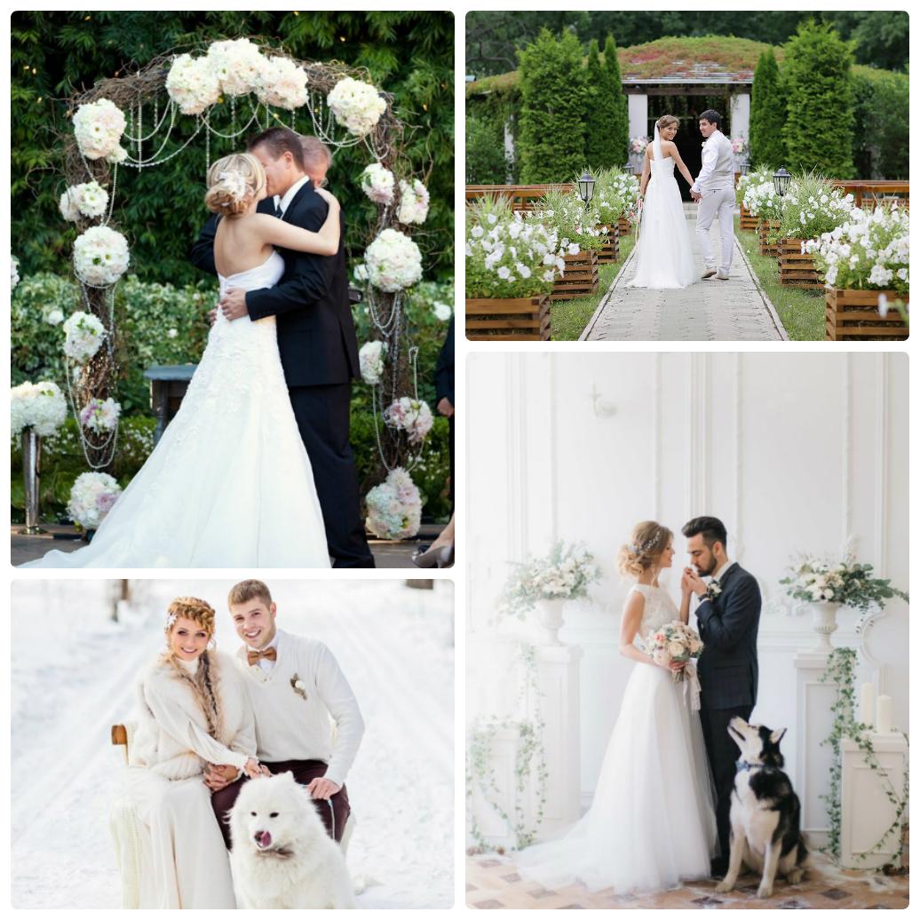 белая свадьба фото видео